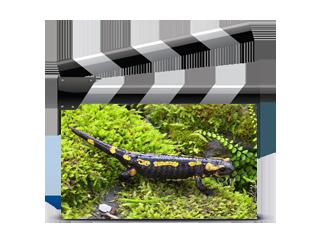 Vidéos Reptiles & Amphibiens