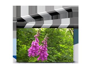 Vidéos Fleurs